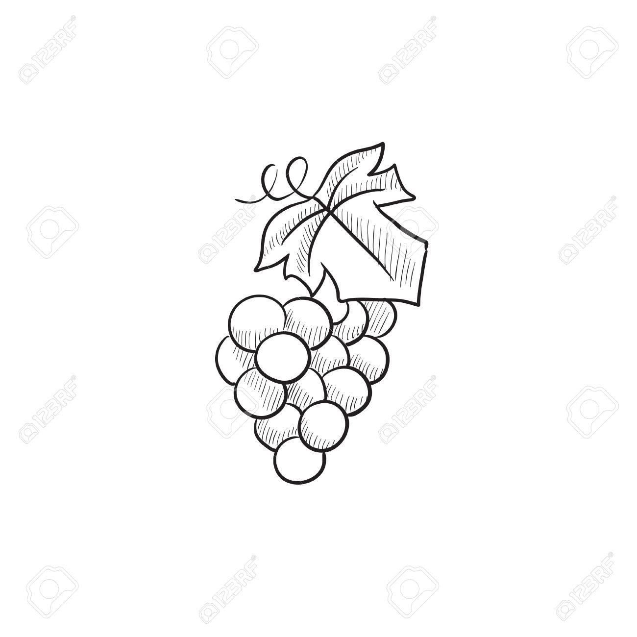 1300x1300 Bunch Of Grapes Vector Sketch Icon Isolated On Background. Hand