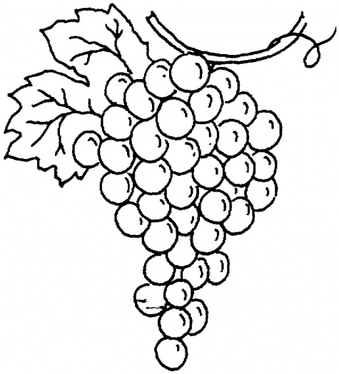 475x525 Bunch Of Grapes Coloring Page To Use As An Embroidery Pattern