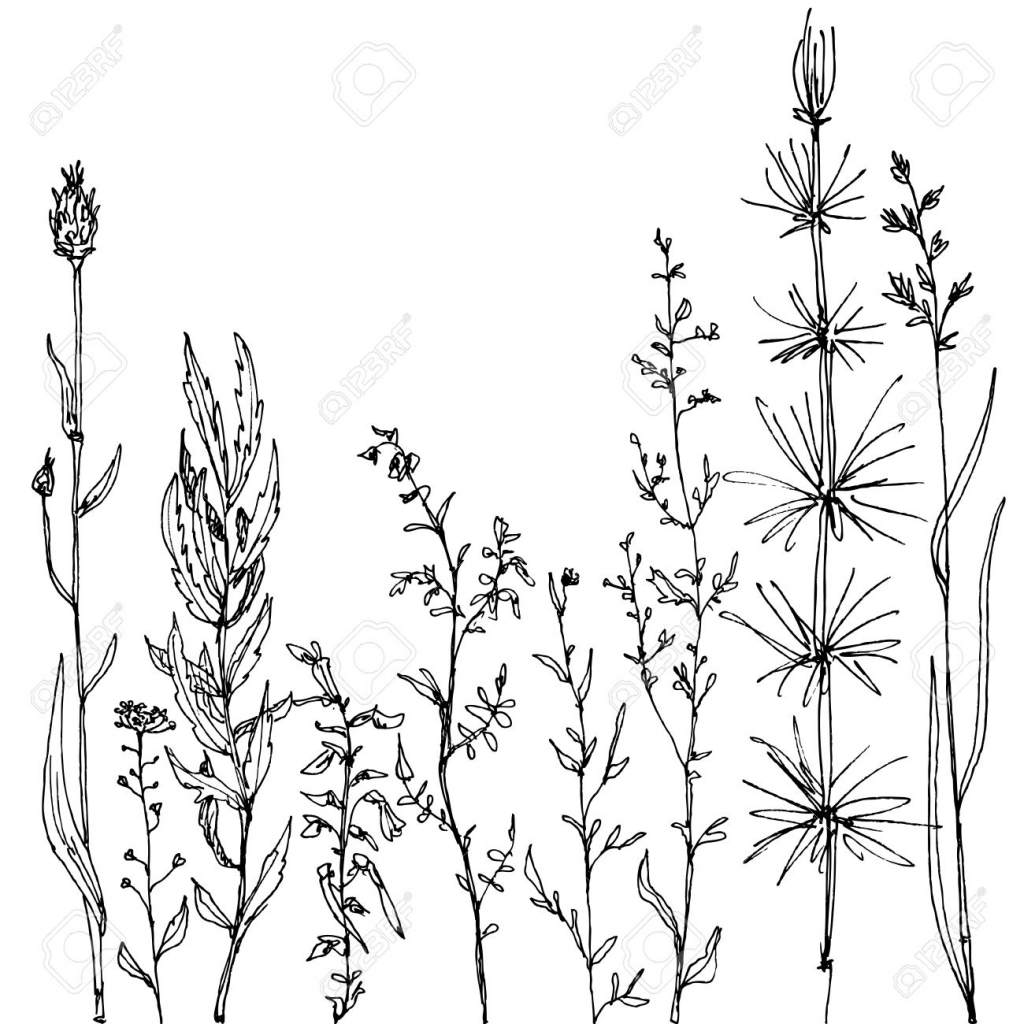 1024x1024 Flower Field Drawing Sketchy Wild Field Flowers And Grass On White
