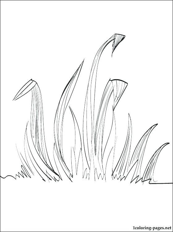 Grass Drawing At GetDrawings