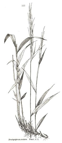 236x541 How To Draw Grass (An Introduction To Negative Drawing