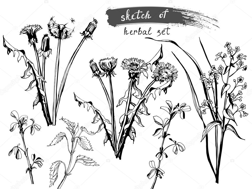 1024x768 Sketch Of Wild Field Flowers And Grass. Stock Vector Galina72