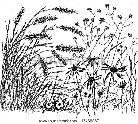 450x403 Botanical Drawings Of Grasses Meadow With Ears And Flowers
