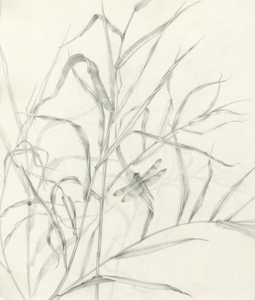 869x1024 Carol Ann Morley Grass