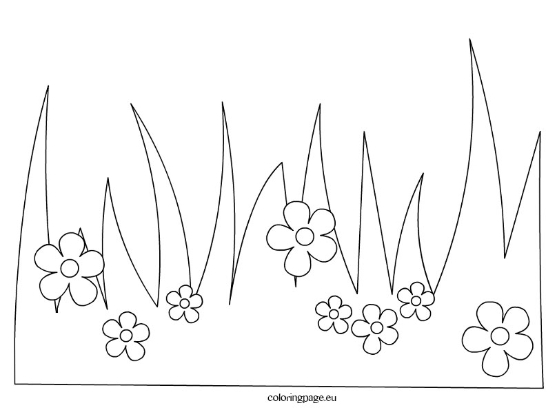 808x595 Grass With Flowers Coloring Page