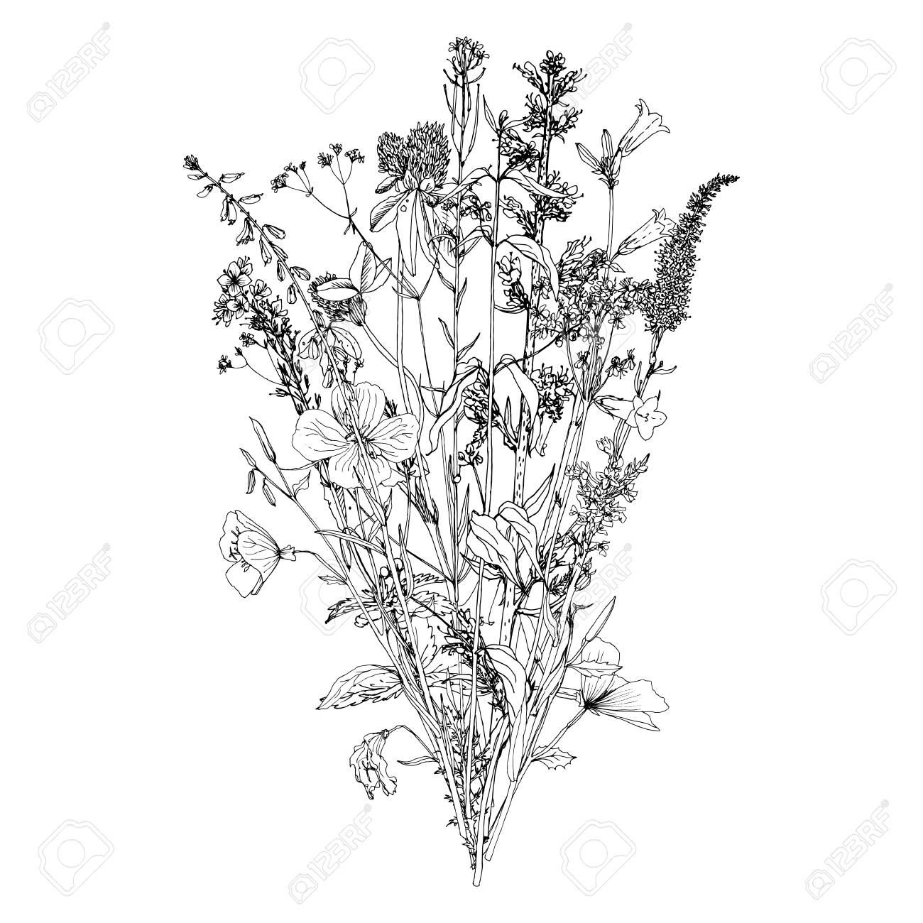 1300x1300 Vector Bouquet With Drawing Wild Plants, Herbs And Flowers