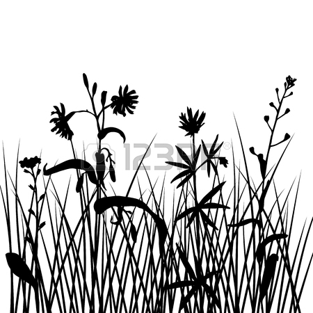 450x450 Vector Silhouettes Of Field Flowers And Grass, Background
