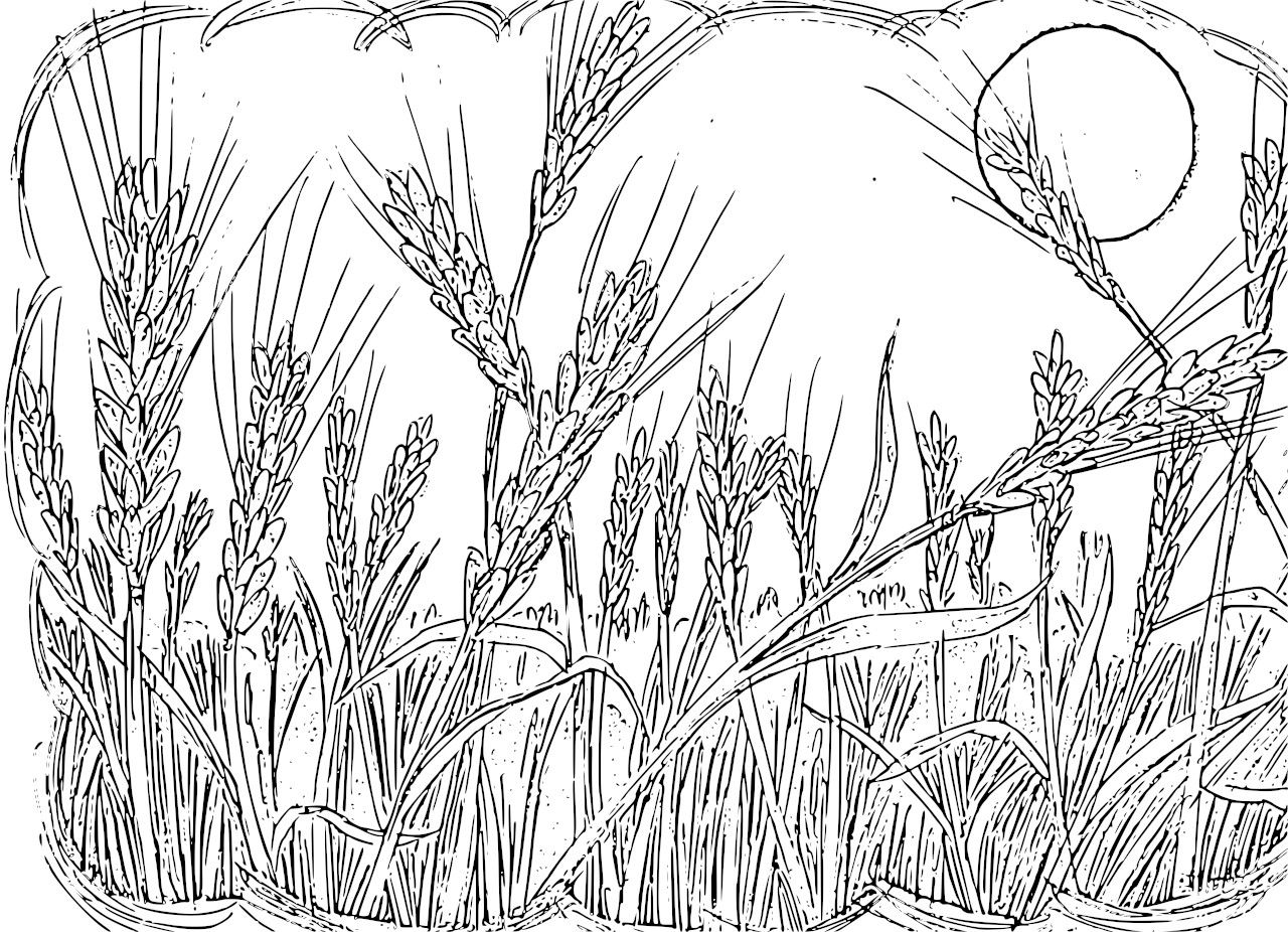 1280x926 Wheat Field Coloring Pages By Robert Teaching