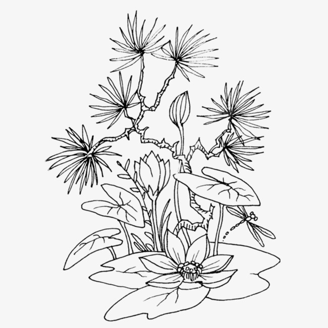 650x651 Hand Painted Black Lotus Line Drawing, Line Drawing, Black, Sketch