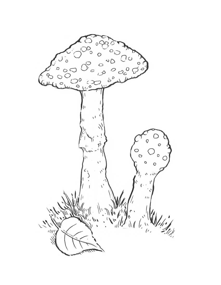 850x1097 How To Draw A Mushroom