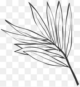260x281 Line Drawing Leaves Png Images Vectors And Psd Files Free