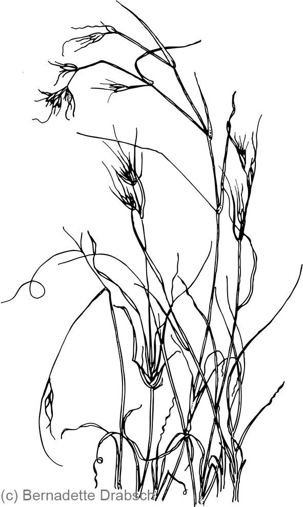 591x988 Line Drawings Bernadette Drabsch