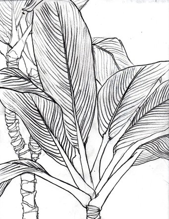 341x441 Contour Line Drawings Of Leaves