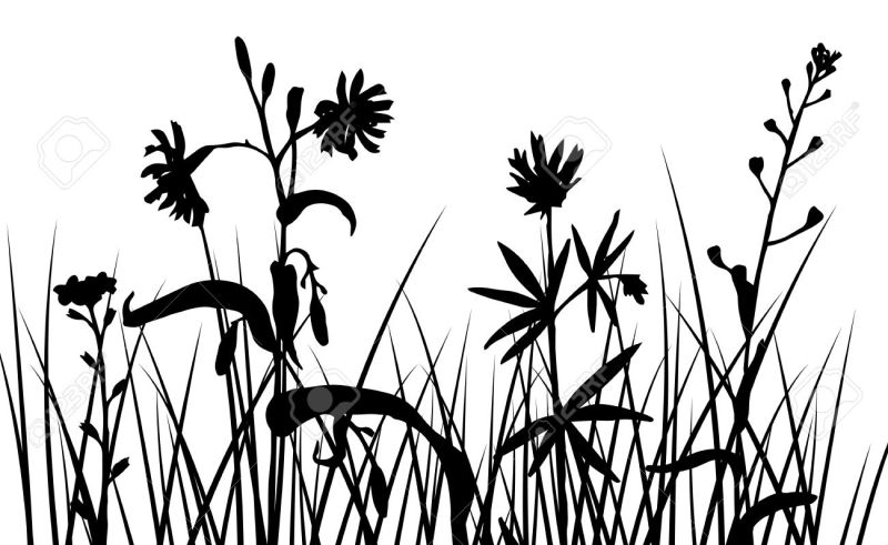 800x491 Flower Border Grass Pencil Drawing Gardening Flower And Vegetables