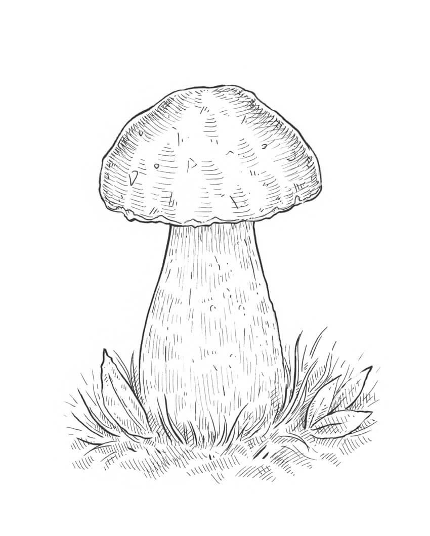 850x1060 How To Draw A Mushroom