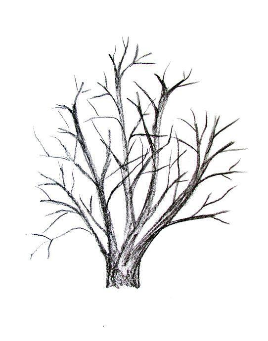 542x690 How To Draw A Tree Tutorial Rocks Tutorials