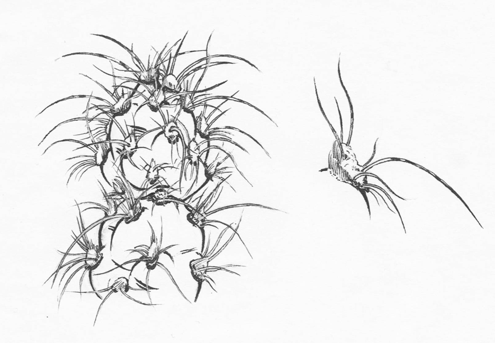 1609x1114 Botanical Drawings