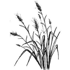 300x300 Grass And Flowers Drawing Grass Background Drawing For Drawings