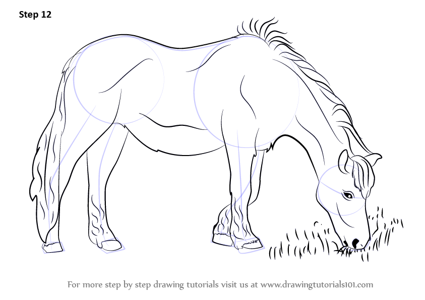 843x596 Learn How To Draw A Horse Eating Grass (Horses) Step By Step