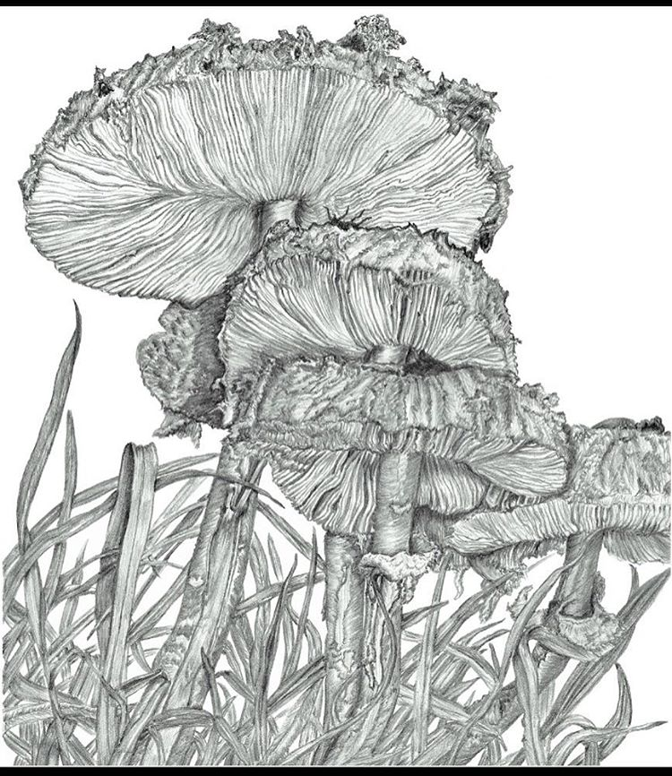 750x866 Toadstools In Grass.