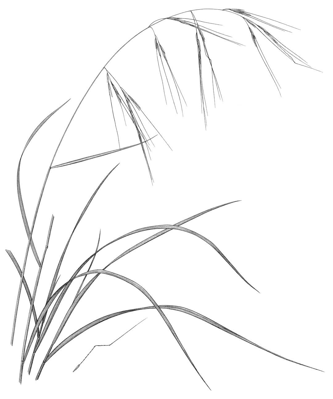 1080x1291 Gardening With California's Monocots Grasses Grasses, Tattoo