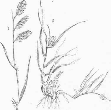 376x371 Grasses
