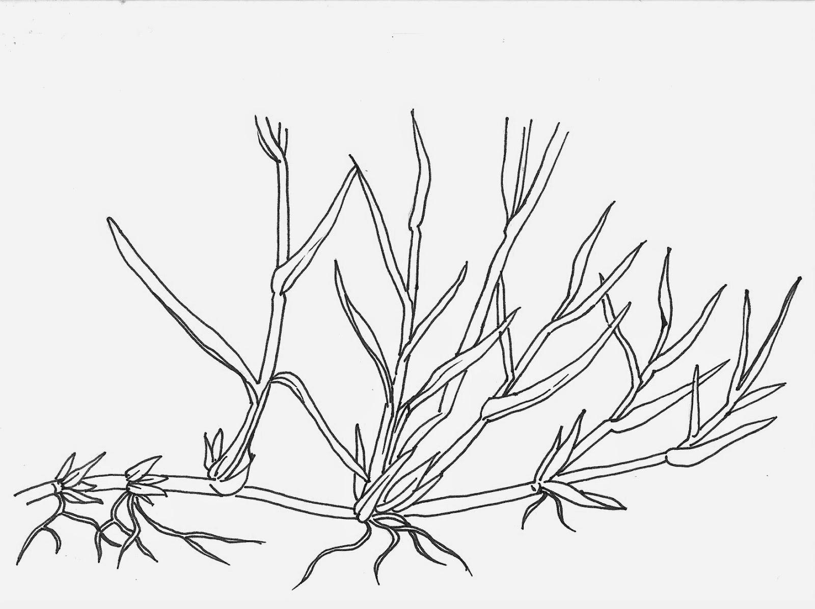 1600x1197 Noel's Garden Blog Grasses