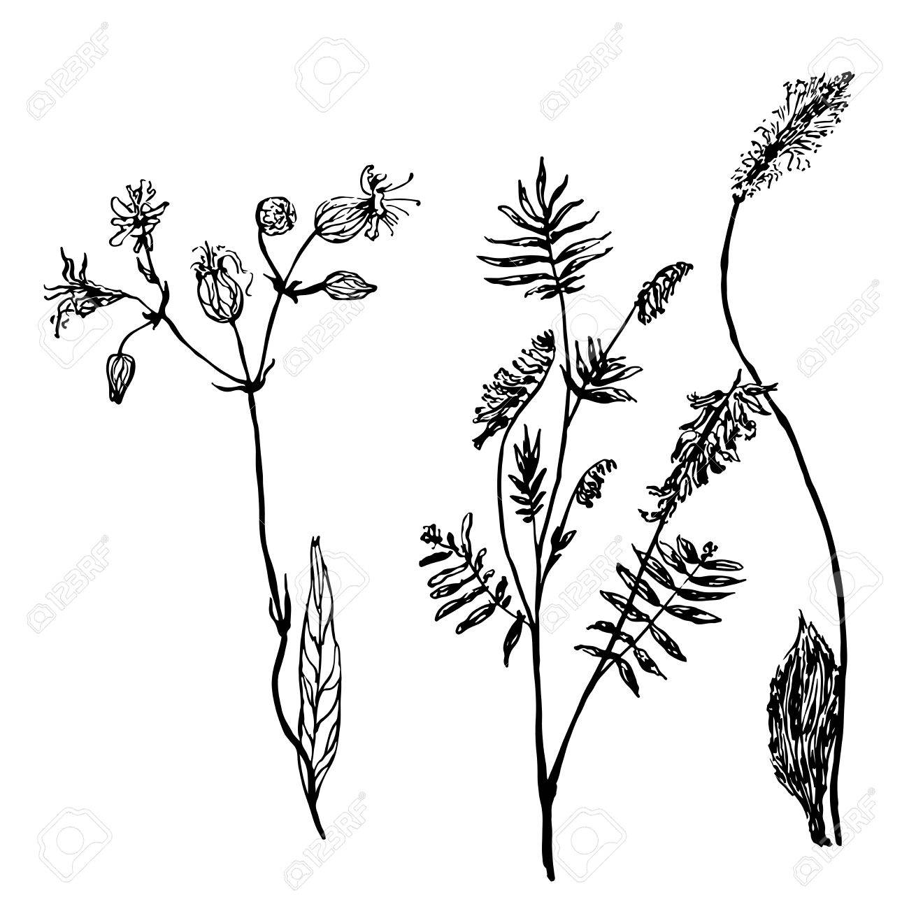 1300x1300 Set Of Isolated Drawings Meadow Grass Sketch Vector Illustration