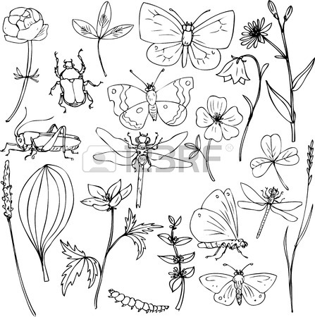 447x450 Big Set Of Ink Drawing Meadow Objects, Plants, Flowers, Grass