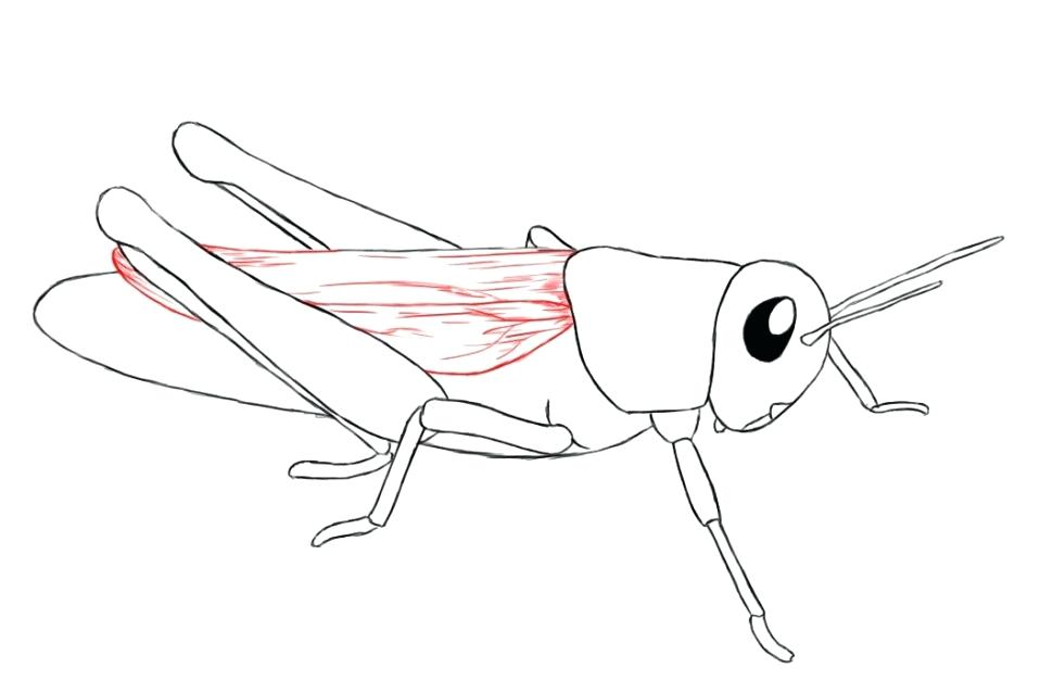 970x638 Grasshopper Coloring Page Sad Grasshopper Coloring Page The Ant