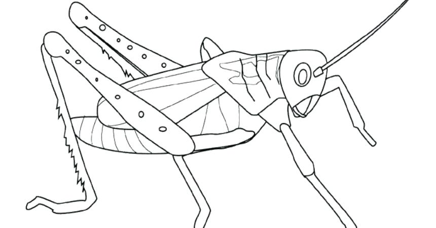 860x450 Grasshopper Coloring Page Sad Grasshopper Coloring Page The Ant
