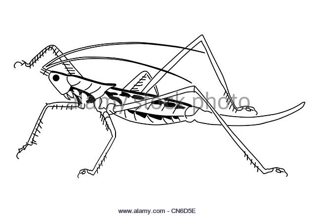 640x439 Grasshopper Silhouette Stock Photos Amp Grasshopper Silhouette Stock