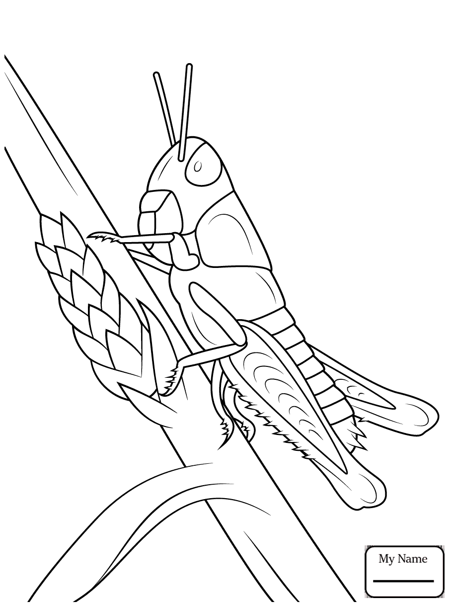 Grasshopper Line Drawing