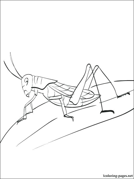 560x750 Grasshopper Coloring Page Sad Grasshopper Coloring Page The Ant