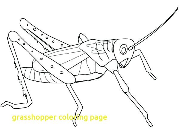 600x450 Grasshopper Coloring Page With Top 10 Grasshopper Coloring Pages