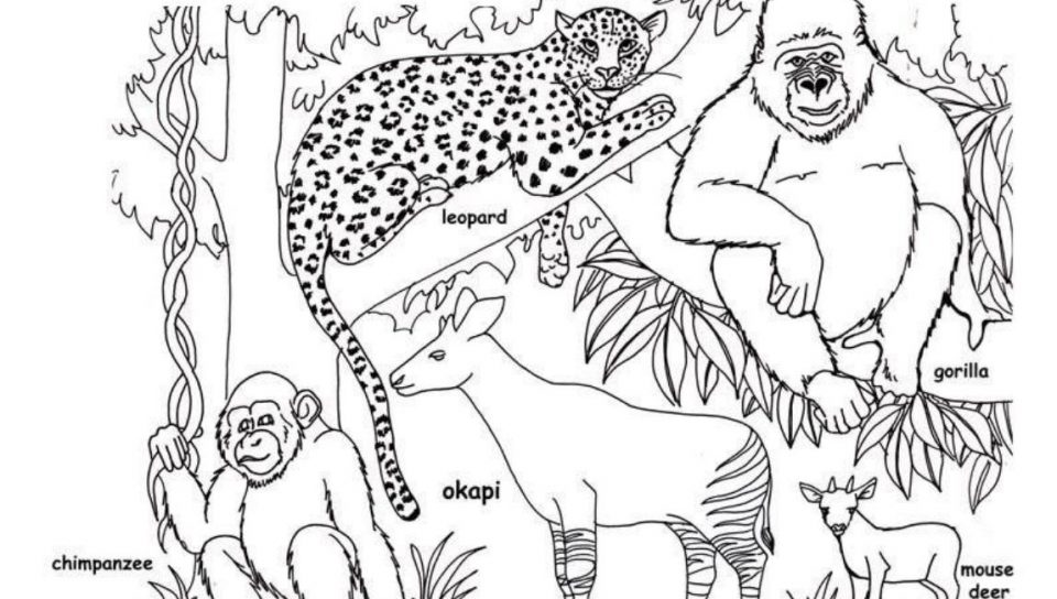 Grassland Animals Drawing At Getdrawingscom Free For Personal Use - African-savanna-coloring-pages
