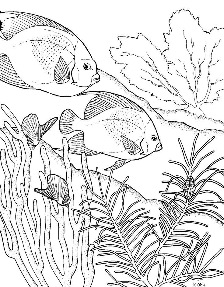 Great Barrier Reef Drawing