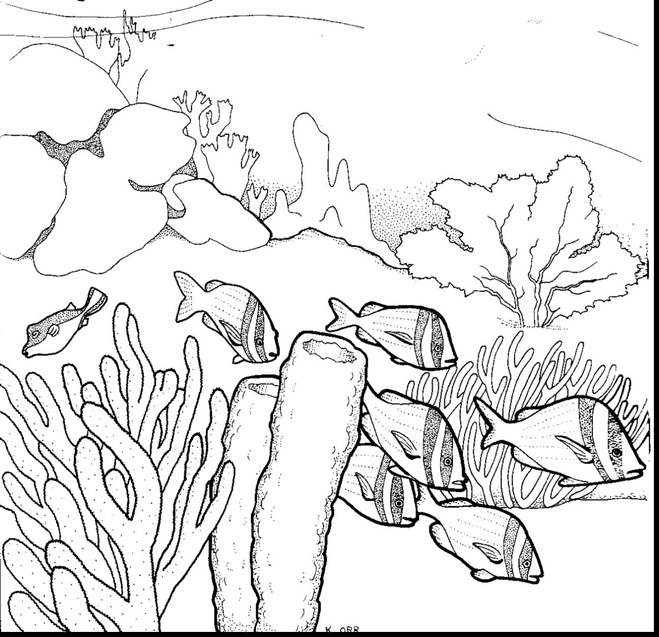 1295x1252 Drawing Of A Coral Reef Drawn Coral Great Barrier Reef