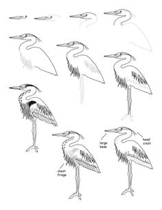 236x305 How To Draw A Great Blue Heron Watercolors Blue