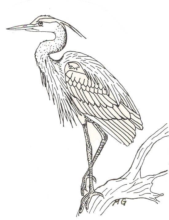 550x715 Blue Heron Coloring Page Christmas Blue Heron