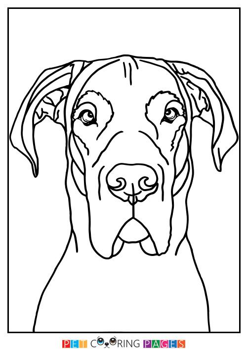 Great Dane Drawing At Getdrawings Free Download