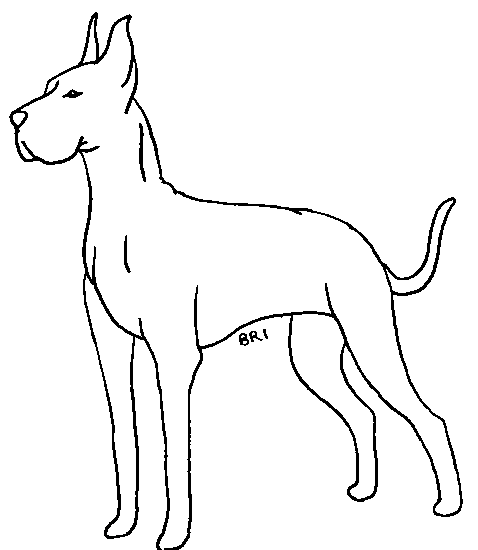 Great dane drawing at free for personal for Great dane coloring pages