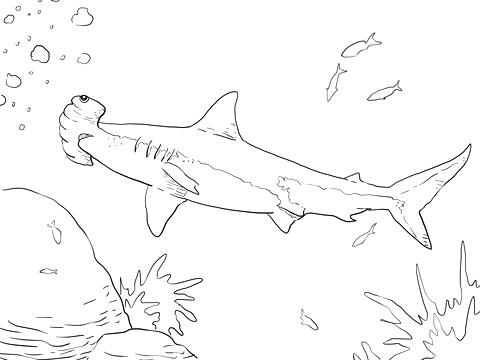480x360 Hammerhead Shark Coloring Pages Great Hammerhead Shark Hammerhead