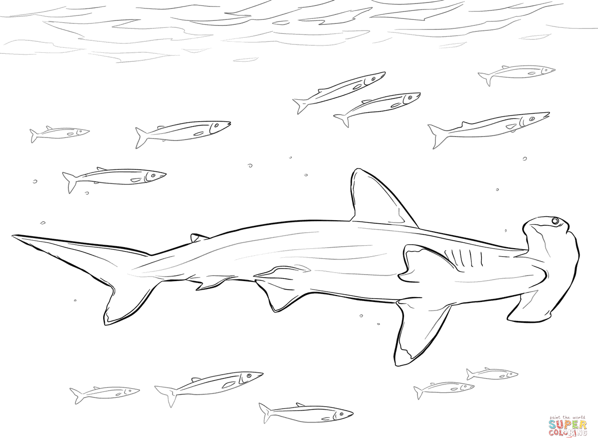 1199x899 Hammerhead Shark With Pilot Fishes Coloring Page Free Printable