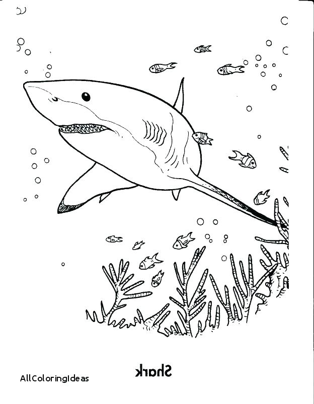 624x803 Shark Tale Coloring Pages Printable Pin