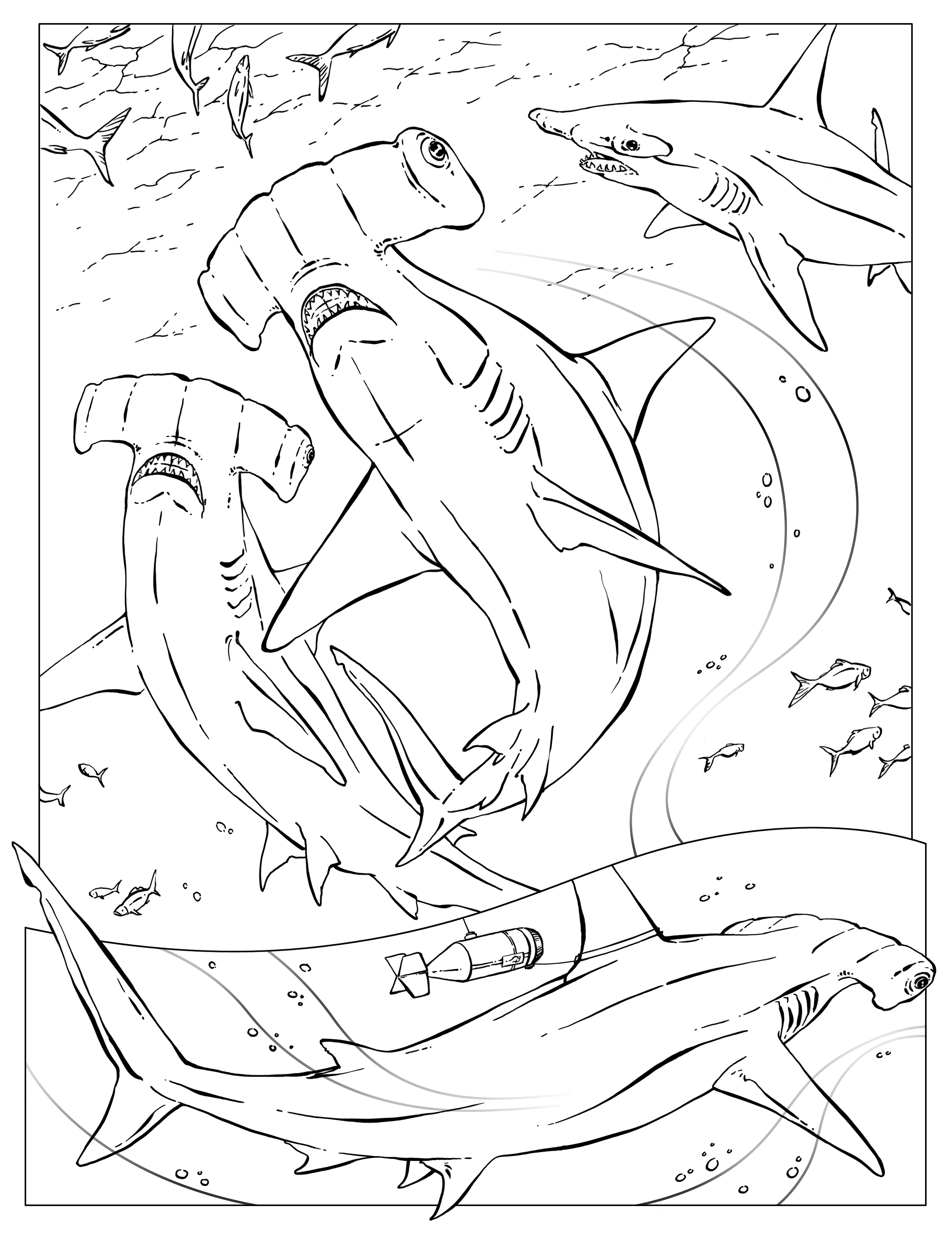 2550x3300 Coloring Pages Of Hammerhead Sharks Free Hammerhead Shark Coloring