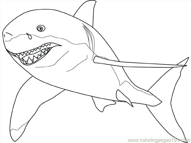 650x487 Free Shark Coloring Pages How To Draw A Great White Step By