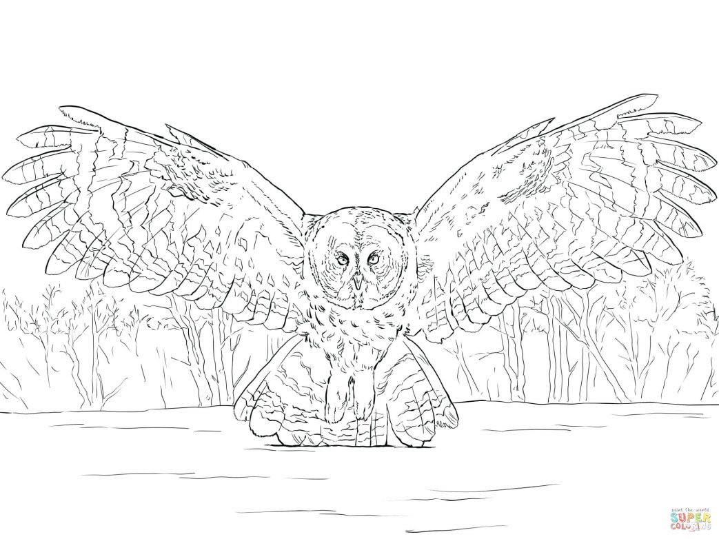 1043x782 Great Horned Owl For Kids Coloring Page Gray Barn Gallery Photos