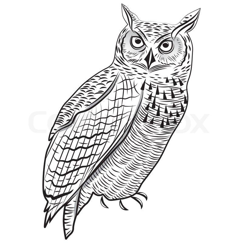 800x800 Owl Bird As Halloween Symbol For Mascot Or Emblem Design Vector