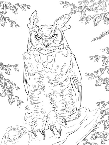 360x480 Realistic Great Horned Owl Coloring Page Free Printable Coloring
